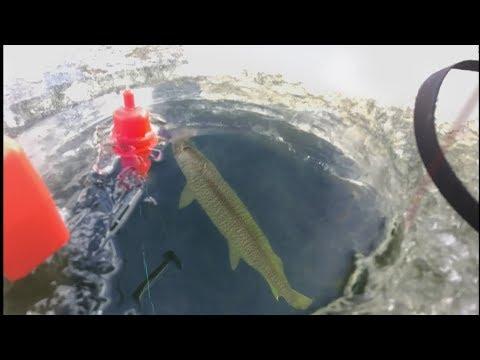Ice Fishing For Giant Muskies