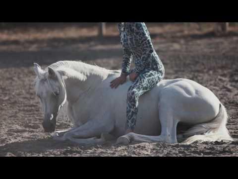 MAGIC ARABIAN HORSE