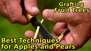 Grafting Fruit Trees | The best grafting techniques for Apples, Pears and other fruit trees