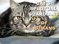 Cat's Spiritual Guardians Of Humans