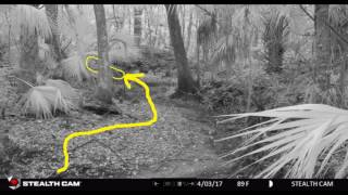 What the TRAILCAM CAPTURED. CAUTION! The Rabbit Hole is DEEP!
