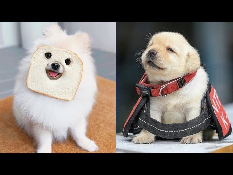 Baby Dogs - Cute and Funny Dog Videos Compilation #10 | Aww Animals