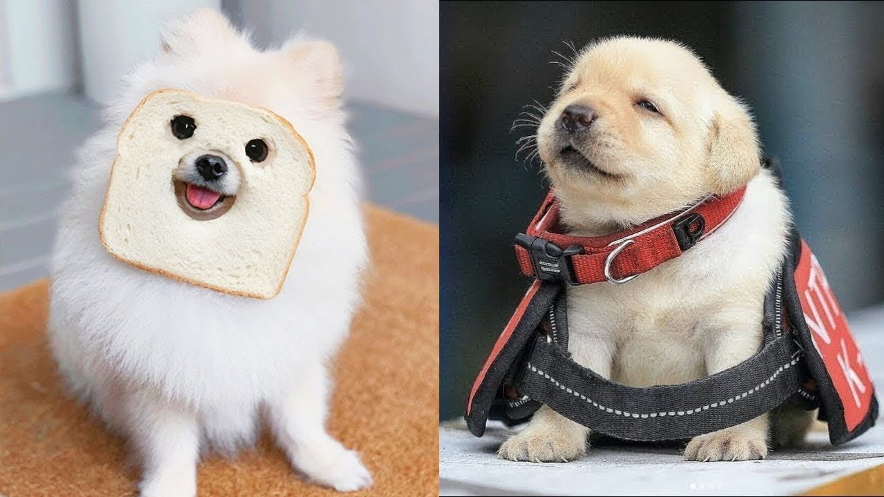 Baby Dogs - Cute and Funny Dog Videos Compilation #10   Aww Animals