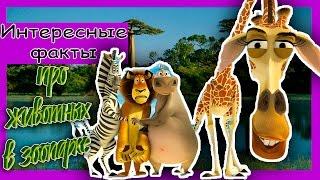 Интересные факты про животных в зоопарках.