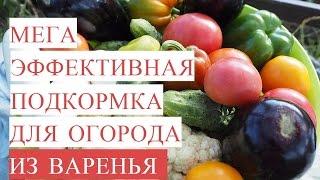 Мега Эффективная Подкормка для Огорода из ВАРЕНЬЯ! Байкал из Варенья!