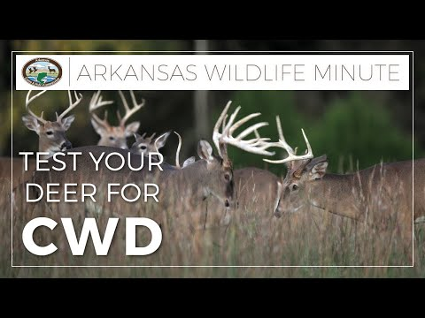 Test Your Deer For Chronic Wasting Disease