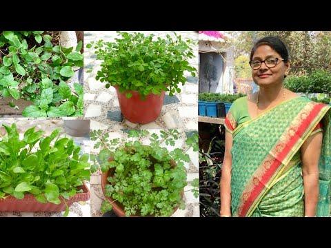 Organic Kitchen Garden : How to grow organic vegetables