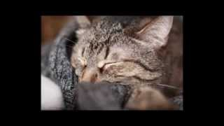 Клип про кота Степаныча.