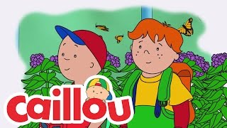 Caillou: Butterfly Surprise thumbnail