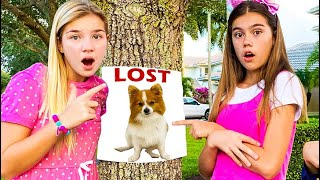 Nastya and Maggie - a story about how dogs were lost