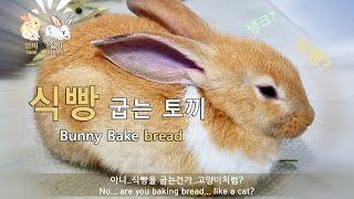 갑자기 분위기 토끼 6편 - 식빵굽는토끼  ENG) S…