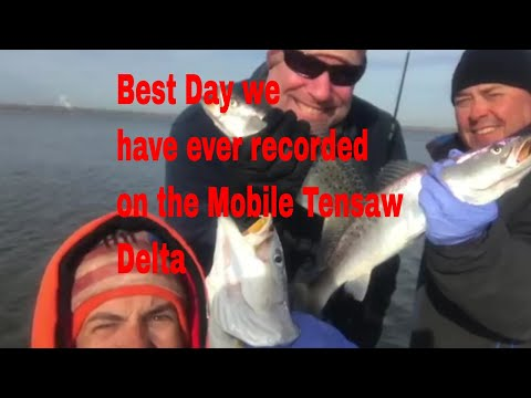 The BEST Mobile Tensaw Delta Speckled Trout And Redfish
