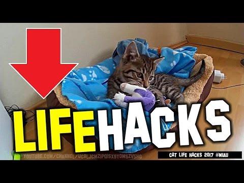 cat-life-hacks---3x-simple-life-hacks-for-the-cat