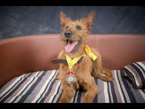 Hattie - Irish Terrier - 3 Weeks Residential Dog Training
