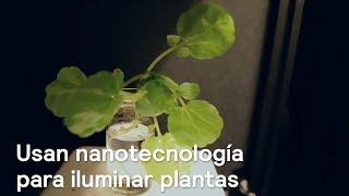 Usan nanotecnología para iluminar plantas - Ciencia - En Punto con Denise Maerker thumbnail