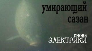 карп в воде после тока , как рыба умирает . смотреть на  видео(карп в воде после тока , как рыба умирает . смотреть видео подписаться https://www.youtube.com/user/AGVIDEO777?sub_confirmation=1 Групп..., 2015-05-05T10:14:49.000Z)