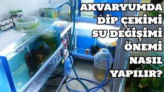Akvaryumda Dip Çekimi (Su Değişimi) Önemi & Nasıl Yapılır?
