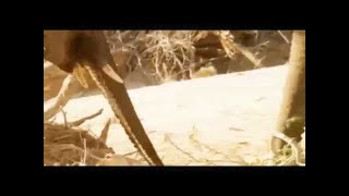 Animals Documentary  Whats Most Amazing Animals   Shap Lions Documentary Film TV Genre