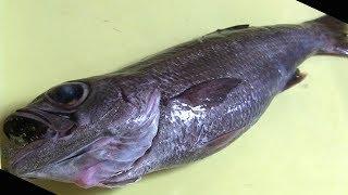 ムツのさばき方 寿司職人の仕込み how to fillet a gnomefish