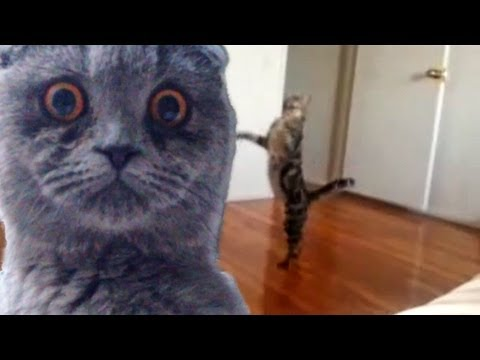 Epic Funny Cats  Compilation Part Two 'The Cat Strikes Back!'