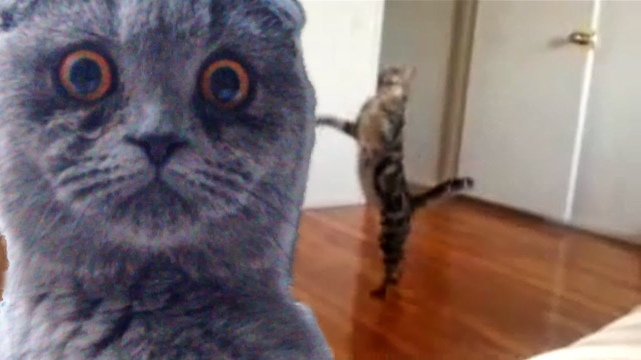 """Epic Funny Cats pilation Part Two """"The Cat Strikes Back"""
