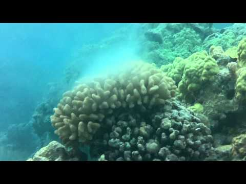 Coral Spawning North West Hawaiian Islands
