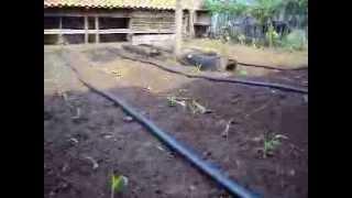 Proses Penyiraman Jagung Semi Otomatis