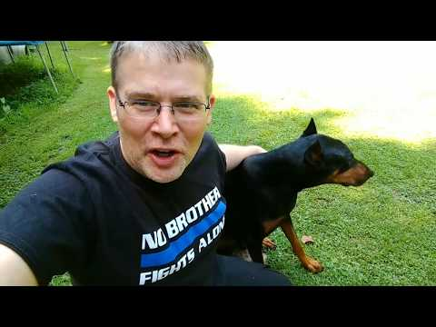 Doberman Pinscher BEST Things about the breed