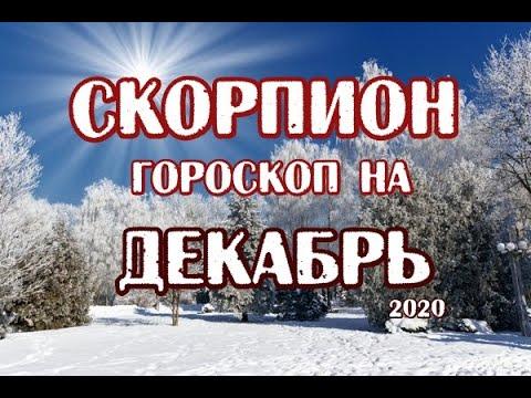 Скорпион. Гороскоп на декабрь 2020. Таро Магических Собак.