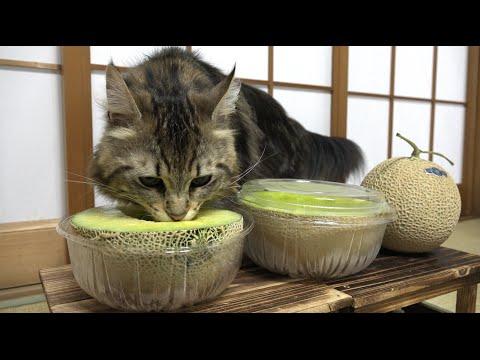 猫だってメロンが食べたい。猫と果物いろいろ