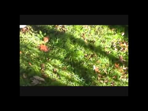 Daniel Boone Algae Bio-Reactor Team Algae Collection 10.29.13