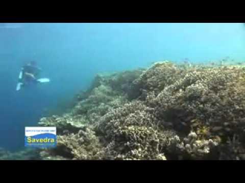 Scuba Diving at