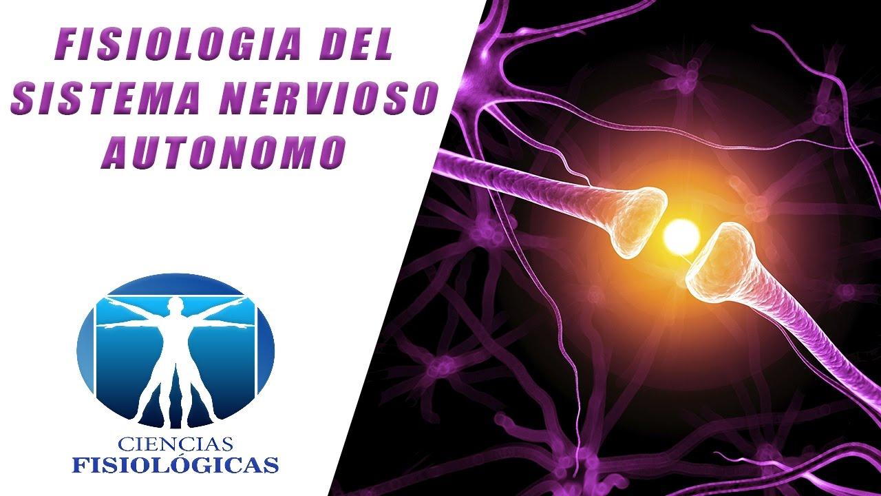 Fisiologia del Sistema Nervioso Autonomo - YouTube