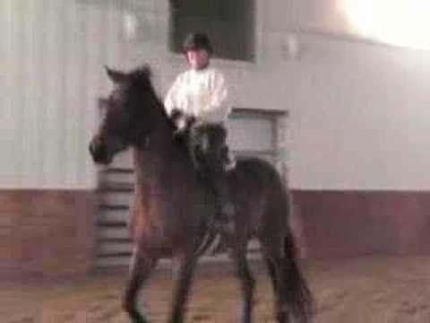 Horse bolting, bucking, rearing, leaping