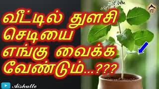 வீட்டில் துளசி செடியை எங்கு வைக்க வேண்டும் Where to place tulsi plants at home Aishutte
