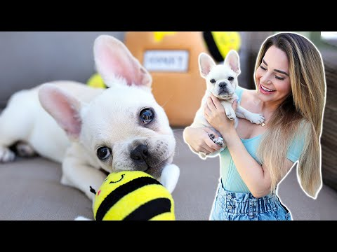 Surprising My Girlfriend With Our New Puppy!