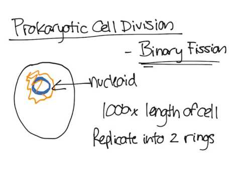 Prokaryotic cell division youtube prokaryotic cell division ccuart Gallery