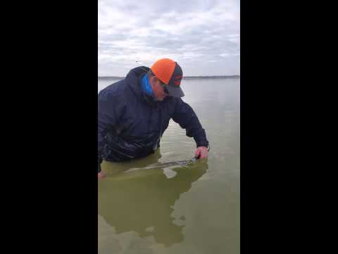 Don's Baffin Bay Big Girl release