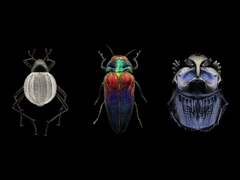 Mindblowing, magnified portraits of insects  Levon Biss