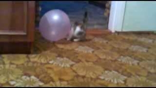 Кошки тоже умеют играть в футбол!!!