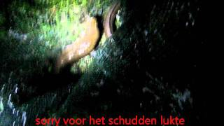 grote paling tijdens het nachtvissen!