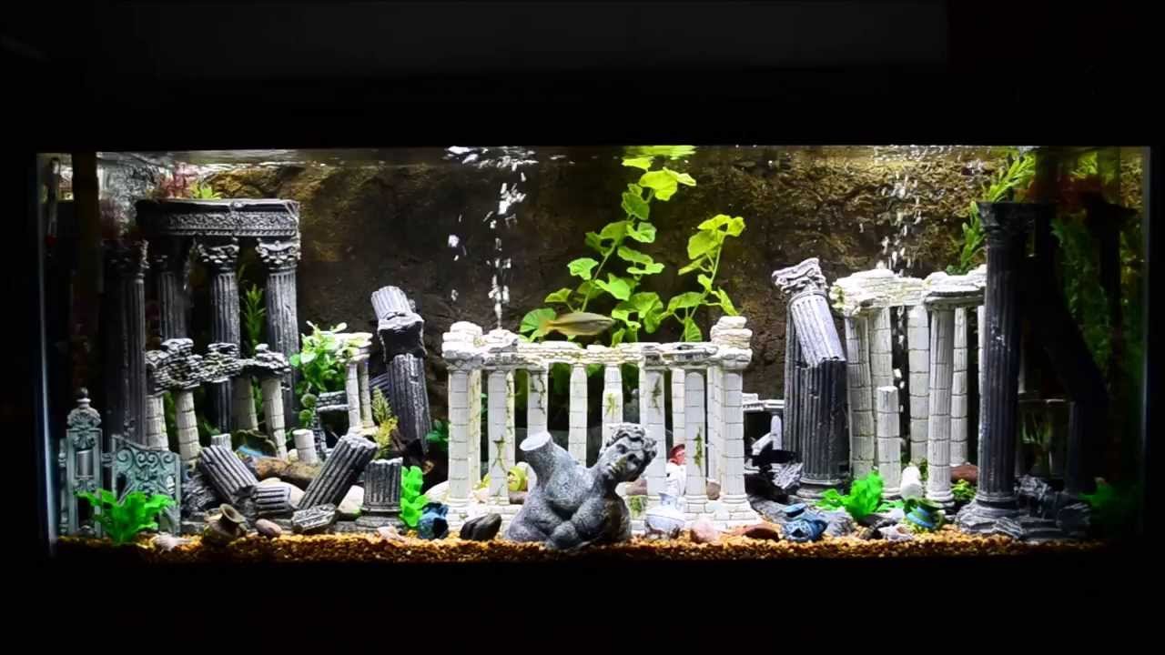 75 gallon roman theme aquarium youtube for Aquarium decoration