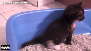 Kitty pooping in a litter box for te firs time ever! Warning: CUTE!