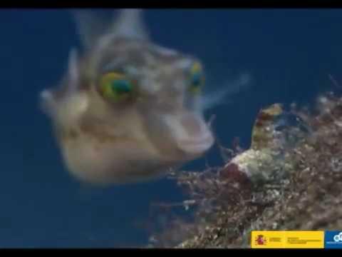 """RESERVA MARINA DE LA ISLA DE LA PALMA """"Una ventana abierta al profundo océano"""""""