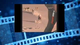 Девочка выращена в дикой природе, гуляет со львами(Африканская дикая природа Дикая природа Серенгети Дикие животные Слон нападает на людей Видео атаки слона..., 2014-06-02T08:58:34.000Z)