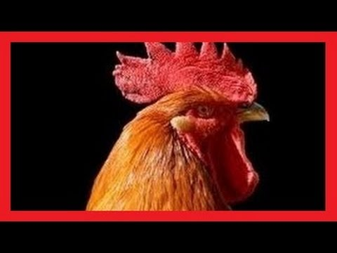 Odgłosy zwierząt dźwięki jakie wydają zwierzęta BZYK.tv