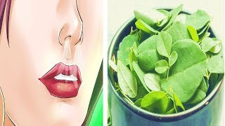 Drink Moringa Everyday, See What Happens To Your Body