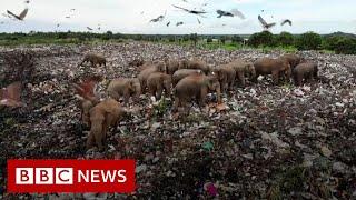 Sri Lanka digs trench to deter scavenging elephants - BBC News