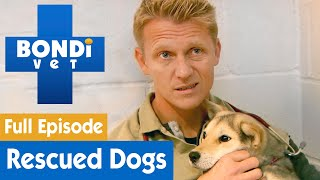 🐶 Treating Rescued Dogs From Korean Meat Farm | FULL EPISODE | Bondi Vet