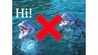Gambar cover The PIA - Episode 8 - Big Fish